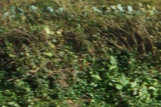 FE 28-70mm F3.5-5.6 OSS左端